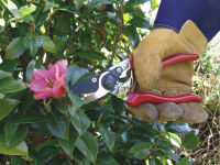 Ciseaux de jardinier