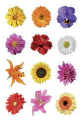HERMA Autocollant de décoration 'petits pots de fleurs'