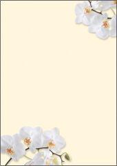 sigel Papier à motif, A4, 90 g/m2, motif 'White Orchid'