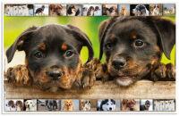 HERMA Sous-main 'chiens', (L)550 x (H)350 mm